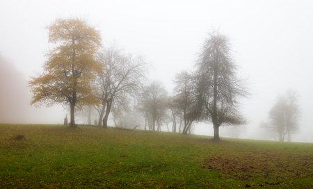Wood at fall time at mist Reklamní fotografie - 162588972