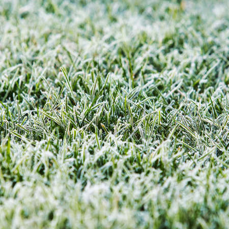 Frozen grass background and texture in landscape view Reklamní fotografie