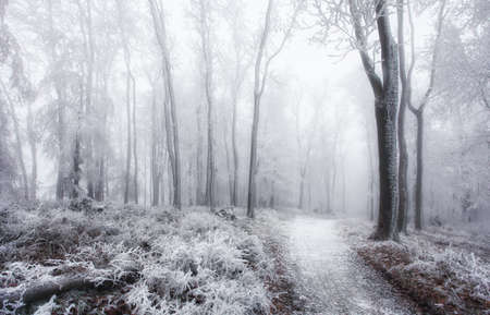 Winter in frost forest with tree and snow Reklamní fotografie - 163480727