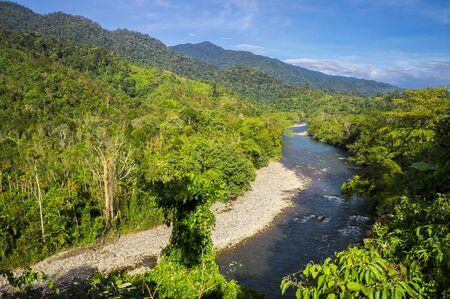Fresh river flows in the virgin tropical rainforest