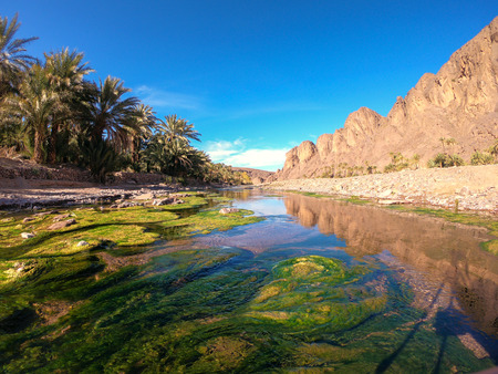 Beautiful Desert oasis landscape in Oasis De Fint near Ourzazate in Morocco, North Africa 스톡 콘텐츠