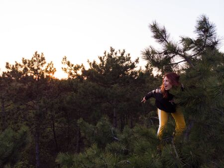 Active sporty redhead girl climbed up on the top of pine tree. Aerial lifestyle shot of young woman in Coniferous forest Stok Fotoğraf