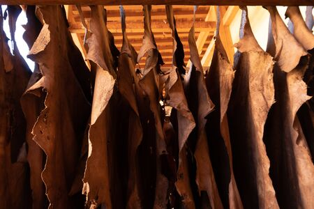 Goat hides used for traditional leather production drying on a bar at the Chouara tannery, Fez, Morocco
