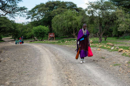 TANZANIA, EAST AFRICA - JANUARY 2020: Masai Woman in traditional clothes and weapons are walking in the savannah by the Gravel Road Surrounded with Green acacia Trees