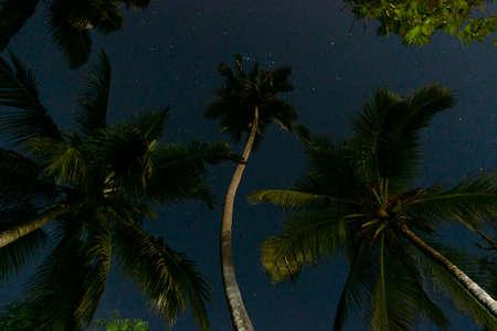 Tropical Night Sky, Palm Trees Bottom View