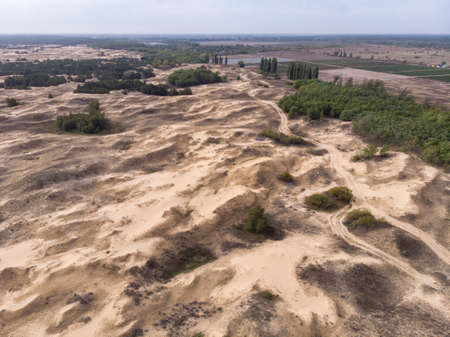Aerial Drone Shot in The largest desert in Europe, Ukraine - Oleshky Sands with Some bushes and Pine trees. Plants in the desert, a lot of yellow sand