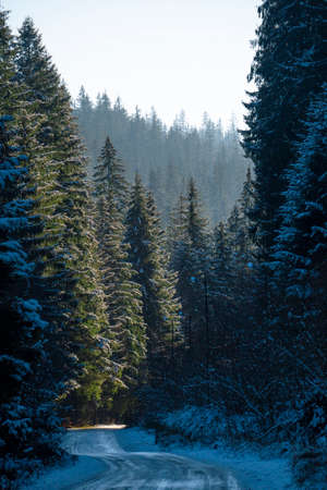 Forest Road COvered in Frost Surrounded with Fur Trees