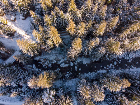 Aerial view of snowy pine trees and a little meandering stream in Carpathians, Ukraine