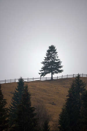 A lonely pine tree stands on a hillside at the beginning of a picturesque autumn valley high in the mountains. Altai, Siberia, Russia.