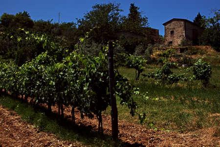 Greve in Chianti - a wineyard Stock Photo