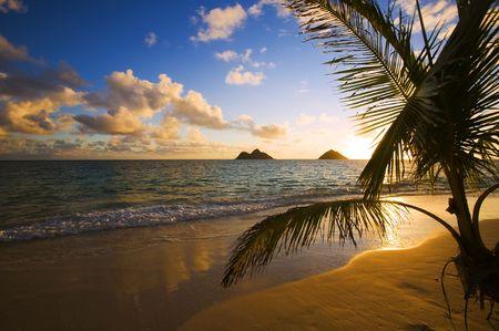 A tropical sunrise through a palm tree at Lanikai beach in Hawaii