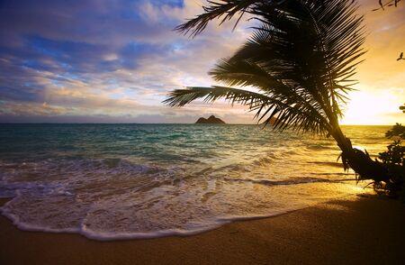 Pacific sunrise at Lanikai beach in Hawaii through a palm tree