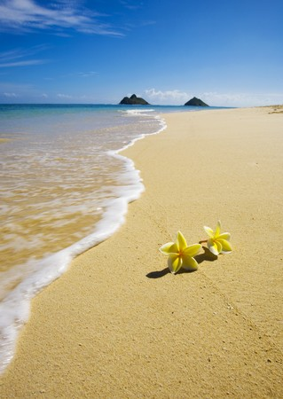 Yellow plumeria blossoms lie on white sand on a Hawaii beach