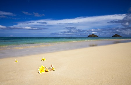 Yellow plumeria blossoms lie on white sand by the tropical pacific Stock Photo