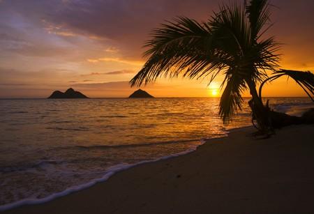 Pacific sunrise at Lanikai beach in Hawaii through the palm branches photo
