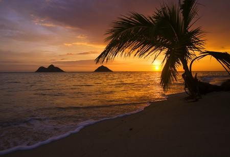 Pacific sunrise at Lanikai beach in Hawaii through the palm branches Stock Photo