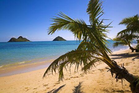 windward: Lanikai beach on the windward side of oahu, hawaii, with palm trees Stock Photo