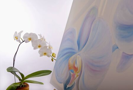 painting of phalaenopsis orchids