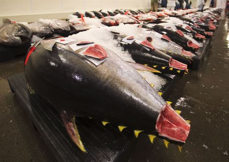 Fresh fish at the daily market auction at Honolulu harbor, Hawaii photo