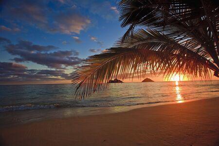sunrise through the palms at lanikai beach