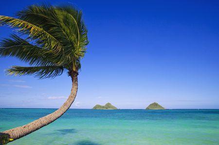 hawai: �rbol de Palma sobre el oc�ano en lanikai, hawaii