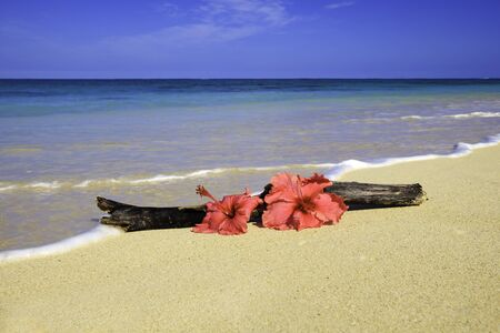 two pink hibiscus on the sand with driftwood photo