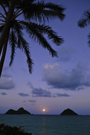 pacific moonrise with palms in oahu, hawaii Stok Fotoğraf