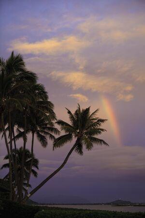 arco iris al amanecer con palmeras en hawaii Foto de archivo - 8828438