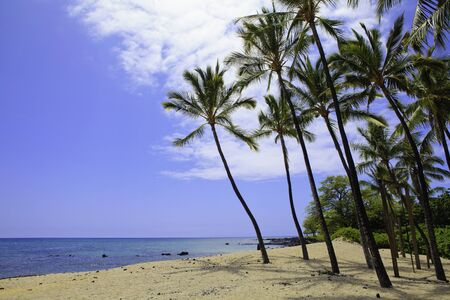 beach in hawaii with palm trees photo