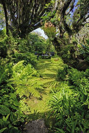 tropical garden in hawaii Stock Photo - 12449813
