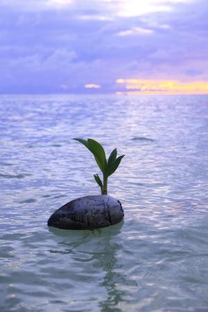 Kokosnoot bij zonsopgang drijven op de oceaan Stockfoto - 19805562