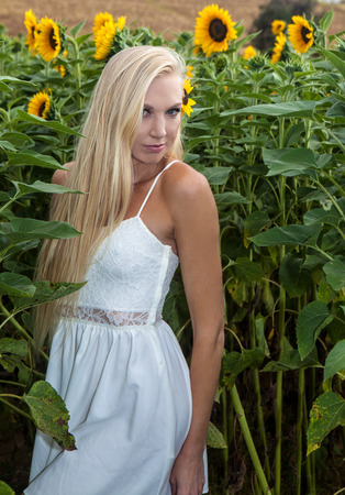 beautiful blond woman in a sunflower field Stock Photo