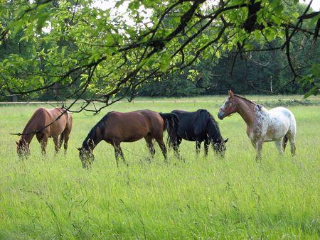 Horses Stock Photo - 2508285