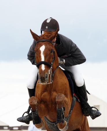 cavallo che salta: Spettacolo ippico  Archivio Fotografico