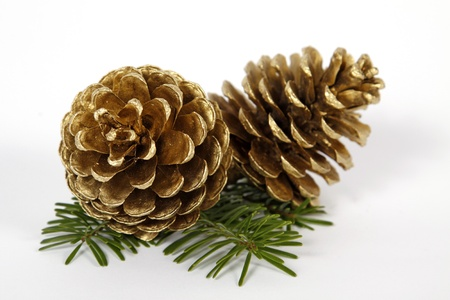 pine cones: Two big pine cones on the white background