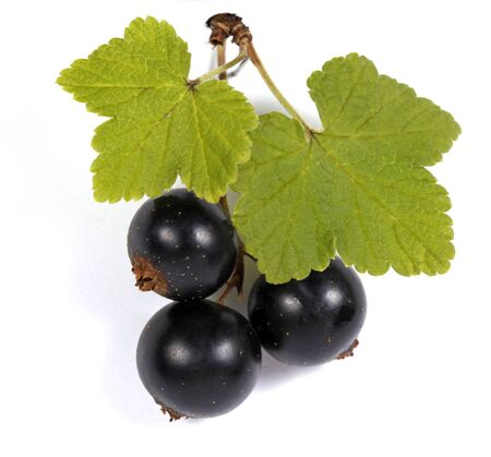 Blackcurrants with green leaves on the withe background