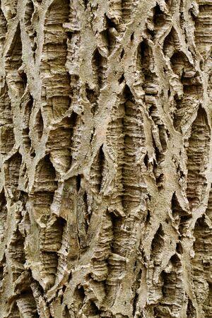 furrows: Bark on the tree