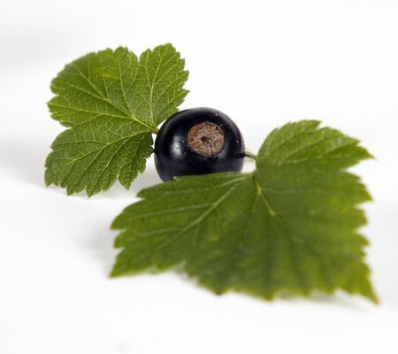 Blackcurrants with green leaves on the withe background Stock Photo - 13067641