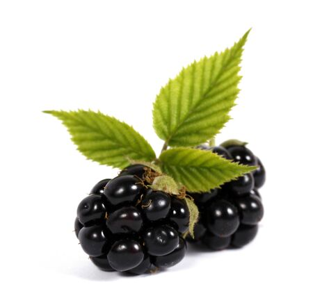 bramble: Blackberries with leaves on the white background