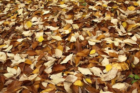 Carpet from yellow and brown leaves