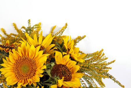 withe: Bunch of sunflowers on the withe background Stock Photo