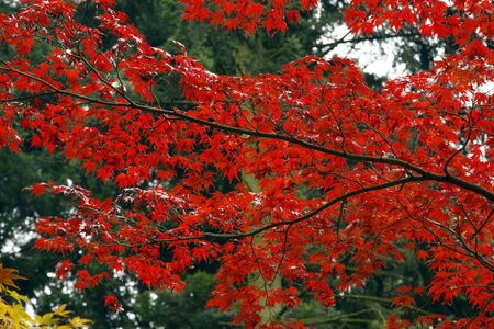 Red leaves in the park with autumn photo