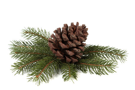 Big pine cone on the white background