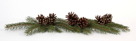 Pine cones on the white background Stock Photo