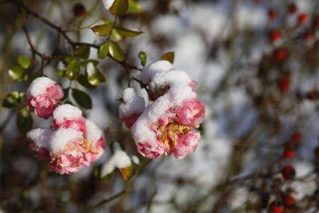 wintertime: wintertime Stock Photo