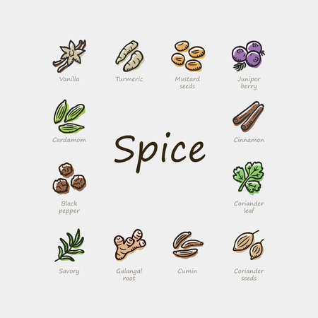 Set of colorful spice icons isolated on light background. Illustration