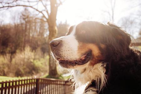 Portrait of dog Stock Photo - 27747636
