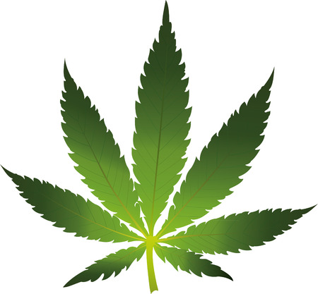 Vector cannabis leaf on white background. Marijuana Ilustracja
