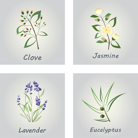 Collection of Herbs . Labels for Essential Oils and Natural Supplements. Lavender, Eucalyptus, Jasmine, Clove Ilustração