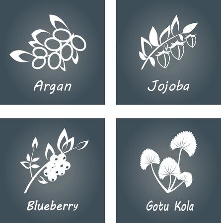 Collection of Herbs . Natural Supplements. Argan, Gotu Kola, Blueberry, Jojoba Vectores